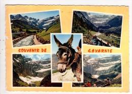 CP 10*15/MM741/SOUVENIR DE GAVARNIE MULTIVUES 1972 - Gavarnie