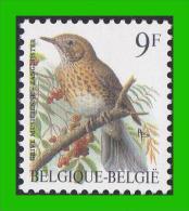 BUZIN - 2426** Grive Musicienne / Zanglijster - FLUOR - 1985-.. Birds (Buzin)