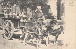 Cpa/pk 1906 Anvers Antwerpen Laitière Flamande Chiens Honden Melkkar - Belgique
