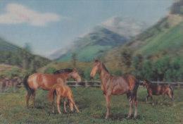 Am - CPM En Visiorelief - Chevaux - Cartes Postales
