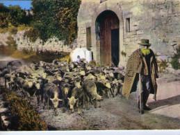 Baux De Provence.. Animée.. Vieux Berger Provençal.. Troupeau De Mouton.. Grifo Pastre Des Baux - Frankreich