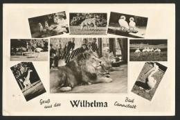 WILHELMA Stuttgart Bad Cannstatt Tier- Und Pflanzenparadies 1953 - Stuttgart