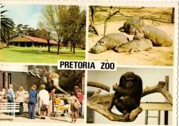 C P M----AFRIQUE DU SUD---PRETORIA  ZOO--multivues--voir 2 Scans - South Africa