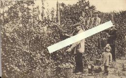 Enines - Nodrenges - Pépinières Louis Sante Et Fils, Horticulteurs - Orp-Jauche
