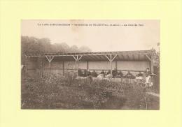 Buzenval - Sanatorium - La Cure De Bois - France