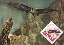 Art, Diorama Cu Zagani, Gypaetus Barbatus Aureus, Bartgeier Card 107 - Malerei & Gemälde