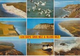62 - LES CAPS GRIS NEZ  Et BLANC NEZ - Multivues - Non Circulée - 2 Scans - - Frankrijk