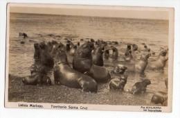 Hermosa Tarjeta Foto Postal Argentina Lobos Marinos Fot Kohlmann Seals Original Postcard Cpa Ak (W4_149) - Argentina