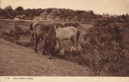 NEW FOREST PONIES - Pferde