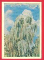 144670 / Russia Art  Viktor Elpidiforovich Borisov-Musatov - TREE Salix Caprea Saule Marsault - Russie Russland Rusland - Paintings
