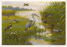 Le Zoute Vanneau Huppé  Kievit  Lapwing Pewit  Canard  Heron  Bird  M.A.Koekkoek Illustrateur Geflugel  Postcard - Birds
