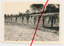 Original Foto - Triest Trieste Ca. 1944 - Soldatenfriedhof - Trieste