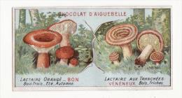 Chromo  AIGUEBELLE   Champignons   Lactaire Orangé Et Tranché - Aiguebelle