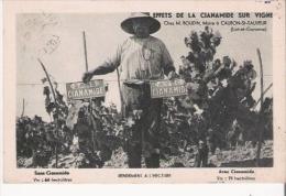 CAUBON ST SAUVEUR (LOT ET GARONNE)  CHEZ M BOUDIN (VITICULTEUR) EFFET DE LA CIANIMIDE SUR VIGNE - France