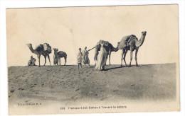 SCENES ET TYPES  TRANSPORT DES DATTES A TRAVERS LE SAHARA - Algeria