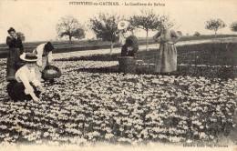 PITHIVIERS (PITHIVIERS-EN-GATINAIS) LA CUEILLETTE DU SAFRAN - Pithiviers