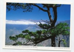 SPAIN - AK 200333 La Palma - Blick Auf Caldera De Taburiente - La Palma