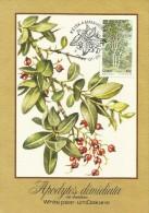 South Africa Ciskei 1984 Trees, Apodytes Dimidiata, Maximum Card - Ciskei