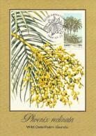 South Africa Ciskei 1984 Trees, Phoenix Reclinata, Maximum Card - Ciskei