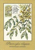 South Africa Ciskei 1984 Trees, Ptaeroxylon Obliquum, Maximum Card - Ciskei