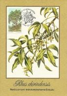 South Africa Ciskei 1984 Trees, Rhus Chiridensis, Maximum Card - Ciskei