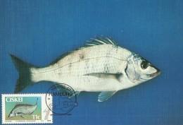 South Africa Ciskei 1985 Fish Lithognathus, Maximum Card - Ciskei