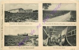30. VERGEZE . Société Des Vignobles De Sainte Thérèse, Par Vergèze .  CPA Multivues . MONTFRIN ORANGE CHAIS - Vergèze