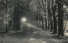 BELGIQUE - BRABANT FLAMAND - TERVUEREN - TERVUREN - Parc De Tervueren - Allée Des Maronniers - Tervuren
