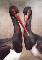 Kissing Animals, BIRDS OISEAUX BLACK STORKS, CIGOGNES NOIRES, 16x11cm Postcard 112 - Vögel