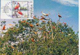D17227 CARTE MAXIMUM CARD 1987 VENEZUELA - IBIS ESCARATIA CP ORIGINAL - Cranes And Other Gruiformes