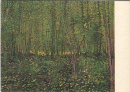 Rijksmuseum Amsterdam Postcard, Vincent Van Gogh, Onderhout, Undergrowth - Peintures & Tableaux