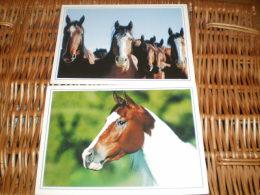 2xPferd Postkarten Postcards Horse Leko - Pferde