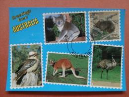 33918 PC: AUSTRALIA: Greetings From AUSTRALIA - Kookaburra / Koala / Kangaroo / Emu / Wombat. - Other