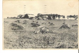 Farm Scene, Prince Edward Island, Near Charlottetown - Ile Du Prince-Édouard