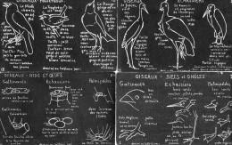 11 CPA.J.M Valton.Tableau Noir.Illustration D'Oiseaux. - Illustrators & Photographers