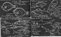 11 CPA.Illustration J.M Valton.Tableau Noir.Poissons De Mer. - Fish & Shellfish