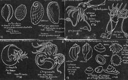 4 CPA.Illustration J.M Valton.Tableau Noir.La Faune Marine. - Fish & Shellfish