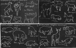 6 CPA.Illustration J.M Valton.Tableau Noir.Quadripèdes. - Animals