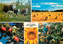 Manitoba, Canada Postcard - Other
