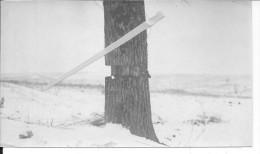 Piège Allemand Détruit Probablement En Argonne 1 Photo Provenant D'un Album Américain 1914-1918 14-18 Ww1 WwI Wk - War, Military