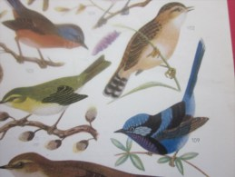 Illustration Planche D'oiseaux Signé Publicité Laboratoire Roux Molydenyl Pharmacie- Médecine- Recto-verso - Werbung