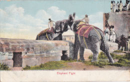 ELEPHANT FIGHT - Elephants