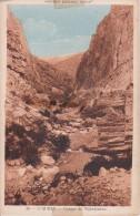 CPA L'Aures - Gorges De Tighanimine - 1947 (5578) - Algerien