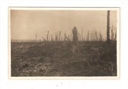 Carte Photo : Militaria : 80  Somme : : Le Bois Du Gros Hêtre : Bois Détruit - Calciné ... - Guerre 1914-18