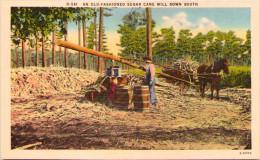 An Old-fashioned Sugar Cane Mill Down South - Non Classés