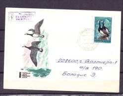Noyta CCCP -  Valmiera 17/11/83  (RM5537) - Ducks