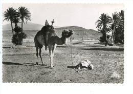 Scènes Et Types : Prière Dans Le Sahara N°2135 (ed Photos Africaines) Dentelée - Sahara Occidental