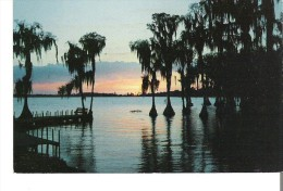 The Fascinating Silhouettes Of Cypress Trees  Sunset In Cypress Gardens, Florida - Fleurs, Plantes & Arbres