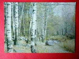 Alma Ata In The Vicinity - Almaty - Birch Trees - 1982 - Kazakhstan USSR - Unused - Kazakhstan