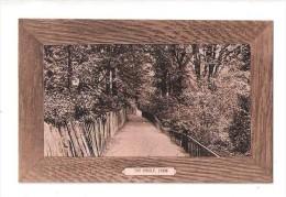 THE DINGLE Lymm LIM Nr Warrington UNUSED CHESHIRE POSTCARD - England